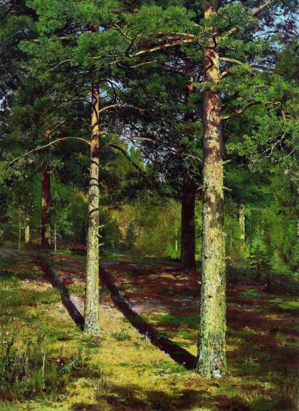 Иван Шишкин Сосны, освещенные солнцем, 1886.jpg